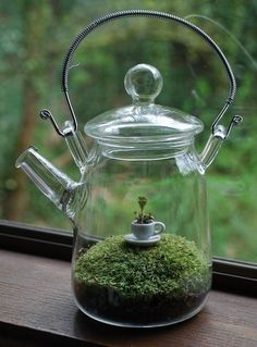 tiny tea cup in garden ~ How clever, two of my favorite things combined, might have to do this in one of my glass teapots! Splendid idea for terrarium!