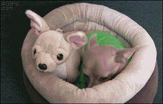 Ein wahrlich stilles Wässerchen... ;-)))  Urlaub mit Hund, Katze & Co - www.tierischer-Urlaub.com - Foto - Google+