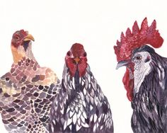 Three Chickens - Large Archival Print