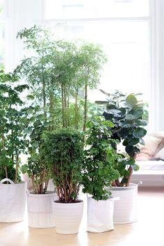 Vähemmän on liian vähän - enemmän on parempi! Potted Palms, Indoor Palms, Indoor Trees, Buy Indoor Plants, Patio Plants, Totems, Types Of Houseplants, Tree Interior, Inside Garden