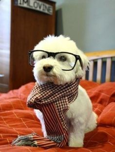 You can call me professor