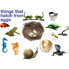 things that hatch from eggs