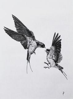Creative Illustration, Audubon, Famous, and Birds image ideas & inspiration on Designspiration Bird Line Drawing, Bird Drawings, Tattoo Drawings, Hand Tattoos, Body Art Tattoos, Sleeve Tattoos, Tatoos, Swallow Tattoo Design, Kunst Tattoos