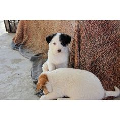 #myfavorite #cutepuppies #ramyogahouse #macleodganj #posingforthecamera #photowalastudiodelhi #canon700d