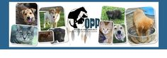 Oglala Pet Project (OPP) is a 100% volunteer driven, community based non-profit organization located on the Pine Ridge Indian Reservation in South Dakota.