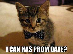 I Can Haz Prom Date?