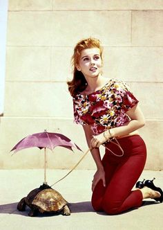 Ann Margaret and a well looked after turtle
