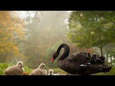 Yedi Karanfil - Saki (Seven Cloves-Saki ) - YouTube