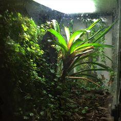 Frog Tank, Dart Frogs, Tanks, Aquarium, Toad, Goldfish Bowl, Aquarius, Fish Tank