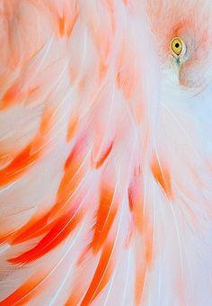 Flamingo feather magic: understanding the language of colour, ability to… Deco Nature, Just Peachy, Tier Fotos, Pink Flamingos, Flamingo Art, Flamingo Color, Flamingo Photo, Flamingo Beach, Bird Feathers