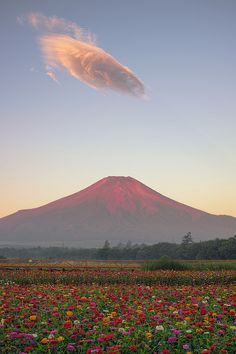 Red Fuji & Zinnia Flowers (Japan) by Yuga Kurita