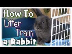 Rabbit Litter Training Tips & Advice! - YouTube