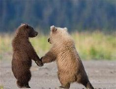"""""""...so meet a bear and take him on out to lunch with you...""""Lyle Lovett"""