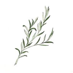 'Rosemary' by Ellyce Moselle on artflakes.com as poster or art print $16.63