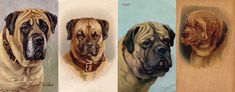 Not only are Mastiffs addictive ... breed collectibles are, too! Gabrielle Simmonds of Australia shares her collection. Modern Molosser  |  www.modernmolosser.com