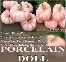 New Varieity for 2012. We'll have these at the Pumpkin Patch this year!  Can't wait!