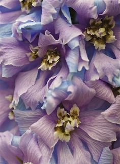 soft-romantic-purple-flowers - Once Wed