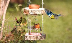 Schnell und einfach können Sie Vogelfutter für die Piepmätze herstellen. Wir zeigen in unserer Anleitung Schritt für Schritt, wie es geht.