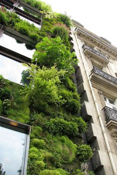 Green Roofs and Great Savings Green Architecture, Landscape Architecture, Landscape Design, Green Facade, Green Roofs, Vertical Garden Design, Garden Living, Rooftop Garden, Green Building