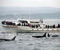 Chris whale watching, discounts thru costco
