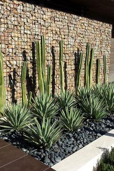 mur gabion pierre naturelle cactus-agaves-galets-jardin-contemporain