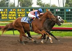 San Diego Horse Race » Dortmund Gets Nod in Thrilling G1 Futurity at Los Alamitos Horse Racing, Race Horses, Thoroughbred, Kentucky Derby, Good Times, San Diego, Animals, Friends, Heart