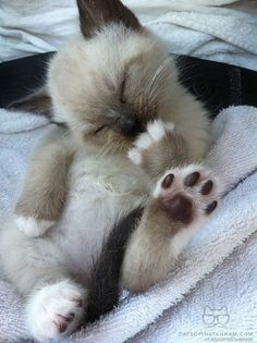cute kitten, adorable foot!
