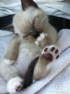 cute kitten, adorable foot!