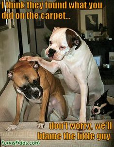funny-dog-dont-worry