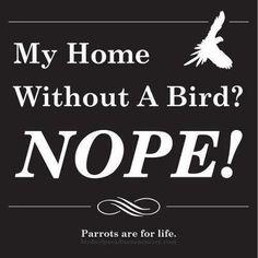 My home without a parrot? Funny Birds, Cute Birds, Pretty Birds, Beautiful Birds, Parrot Quotes, Bird Quotes, Bird Mom, Crazy Bird, Bird Lady