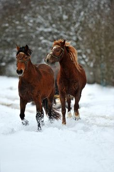 Helpful Tips to Care for Your Senior Horse This Winter