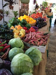 Great local produce, Miami Beach Botanical Garden farmers market every Wednesday.