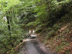 Hiking, Country Roads, Tourism, Woodland Forest, Nature, Walks, Trekking, Hill Walking