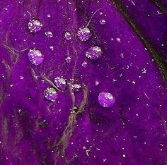 Purple Craze « Rain drops on purple flower...