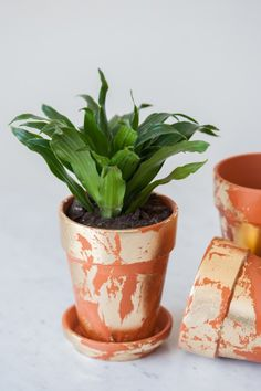 DIY Gold Leaf Planters from @cydconverse / Photography by Alice G Patterson
