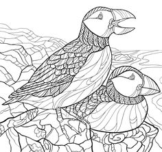 The Atlantic Puffin Is A Bird Of Sea Returning To Offshore Islands Only During Free ColoringAdult ColoringColouringScreen