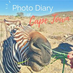 Cape Town has given me some of my best friends, my most fun memories, my craziest stories, and the adventure-loving life I have now. Here's my photo diary