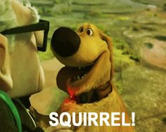 Ms. Sepp's Counselor Corner: SQUIRREL: Distractions in Our Day