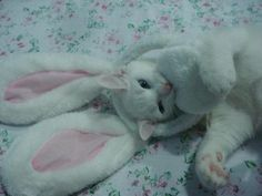 Kitty letting out her inner bunny :)