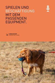 🎧 In dieser Podcast Episode #28 erfährst du: 1️⃣ Welche Spielzeuge wir verwenden. 2️⃣ Worauf du bei der Beschaffenheit achten solltest. 3️⃣ Welche Kritierien du sonst für deinen Hund im Blick behalten solltest. 4️⃣ Was du tun kannst, damit es nicht dauernd was Neues geben muss. Hör gern rein. Movie Posters, Movies, Pooch Workout, Dog Breeds, Animal Welfare, Too Busy, Hunting, Films, Film Poster