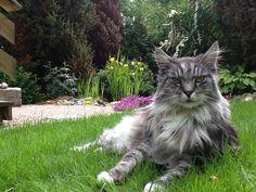This is MY garden!