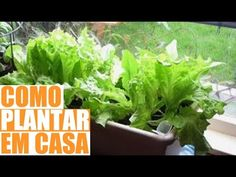 Como Fazer uma Horta no Quintal - Como Plantar em Casa