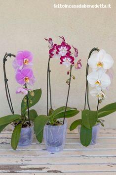 Best 11 garden design ideas for small gardens uk – SkillOfKing. Dendrobium Nobile, Phalaenopsis Orchid, Small Garden Uk, Flora Garden, Garden Care, Plant Care, Watercolor Flowers, House Plants, Flower Power