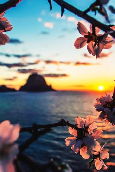 "Es Vedrà, Ibiza, with almond flowers framing the foreground. Previous pinner wrote, ""Ibiza is just beautiful, even in the winter! Beautiful Sunset, Beautiful World, Beautiful Places, Oh The Places You'll Go, Belle Photo, Pretty Pictures, Amazing Pictures, Pictures Images, Nature Photography"