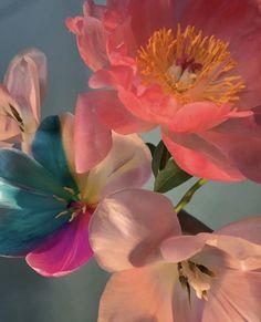 Flower Aesthetic, Aesthetic Art, Aesthetic Pictures, My Flower, Beautiful Flowers, No Rain, Aesthetic Wallpapers, Flower Arrangements, Iphone Wallpaper