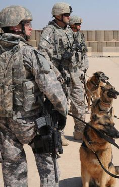 Military dogs sit obediently, waiting for their handlers next command.