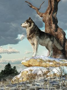 Lone #Wolf Artist Daniel Eskridge - Digital Painting A lone gray wolf stands atop a pile of snow covered boulders. Seen in profile, this alert hunter looks across a wintry landscape in the North American wilderness. He stands next to a twisted old oak tree almost as if he is guarding its gnarled trunk. A few fir trees can be seen in the distance and dark clouds fill the winter skies.