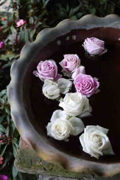 Roses Floating In A Birdbath