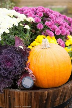 Whiskey Barrel Decorate For Fall Using Mums, Pumpkins, and Kale with a Small…