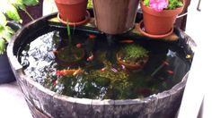 Barrel pond--I'm doing this in my backyard.